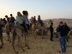 przejażdżka na wielbłądach